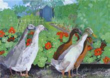 Allotment Ducks