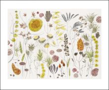 Spanish Seedheads Watercolour by Angie Lewin Art Greeting Card