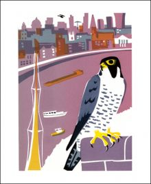Peregrine Falcon (Tweet of the Day) Screen print by Carry Akroyd
