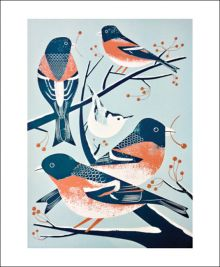 Bramblings and a Nuthatch by Chris Andrews
