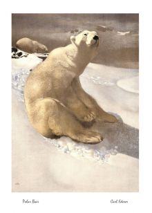 Polar Bear By Carl Ederer