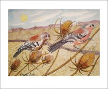 Late Summer Chaffinches watercolour by Emily Sutton