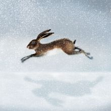 Hare in the snow Greeting Card by Ruth Molloy