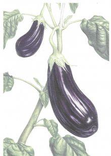 Aubergines (Melanzane parmigiana) Recipe Card By Ann Swan