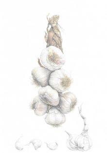 String of Garlic (Roasted Garlic Aioli) Recipe Card By Ann Swan