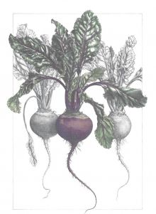 Beetroot Trio (Beetroot Humous) Recipe Card By Ann Swan