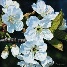Cherry Blossom by Linda AlexanderFine Art Greeting Card, Oil on Linen