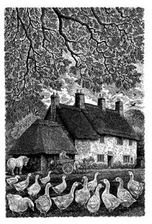 Candleford Green Wood Engraving By Sue Scullard
