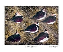 A Deceit of Lapwings linocut - Lisa Hooper Art Greeting Card