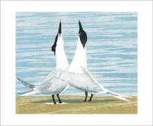 Sandwich Terns by Lisa Hooper