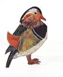 Mandarin Duck 3D By Judy Lumley