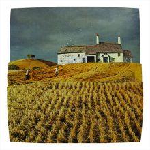 Devon Harvest By Marain Hill