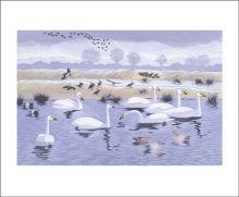 Seven Swans Linocut by Niki Bowers