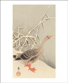 Snow Goose   Woodcut by Ohara Koson