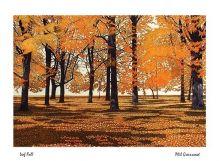 Leaf Fall By Phil Greenwood