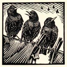 Starlings by Richard Allen SWLAArt Greeting Card, Linocut
