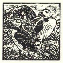 Puffins by Richard Allen SWLA