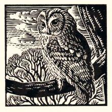 Tawny Owl by Richard Allen SWLA