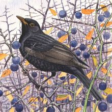 Blackbird by Richard Allen SWLA