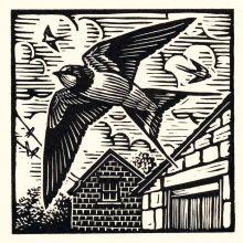 Swallow by Richard Allen SWLAArt Greeting Card, Linocut