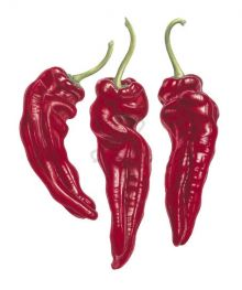 Ramiro Peppers Provencale SAVOURY RECIPE CARDS BY ANN SWAN