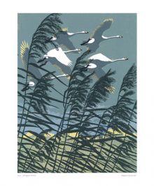 Whooper Swans Linocut by Robert Gillmor