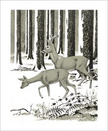 Winter Deer by Robert Gillmor