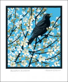 Blackthorn Blackbird Linocut by Robert Gillmor
