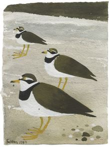 MARY FEDDEN Ringed Plovers 1989