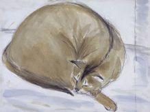 DAME ELIZABETH BLACKADDER Abyssinian Cat
