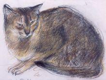 DAME ELIZABETH BLACKADDER The Abyssinian Cat 'Rosie'