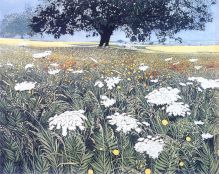 Spanish Fields GREETING CARD BY PHIL GREENWOOD