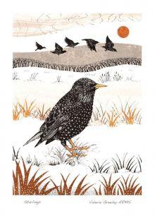 Starlings By Valerie Greeley