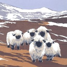Valais Black-nosed Sheep By Lizzie Perkins