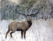 Caroline McMillan Davey Winter Stag PACK OF FIVE (CHARITY)
